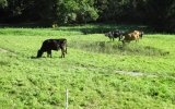 Pastva v Šáreckém údolí
