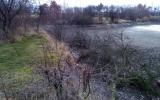 zpustlé břehy Olšanského rybníka