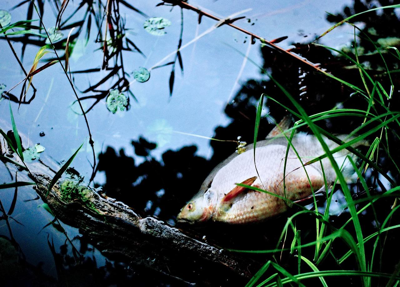 úhyn ryb