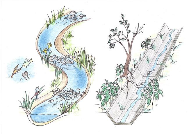 revitalizace_prirodni