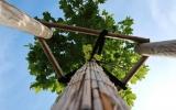 Centrální park na Chodově, nové stromy