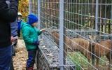 Poprvé u muflonů