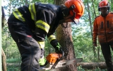 Hasiči se cvičili v kácení na kůrovcových stromech v pražských lesích