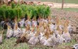 Sazenice čekají na výsadbu