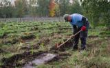 zalesňování bývalé zemědělské plochy
