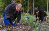 výsadba stromků na pasece