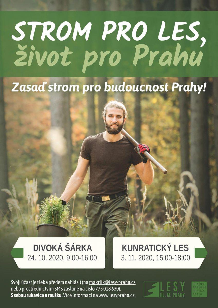 strom-pro-les_2020_nahled
