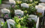 aromatické bylinky