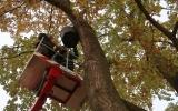 na Císařský ostrov jsme instalovali nové netopýří budky