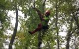 ve Stromovce zbavujeme stromy suchých a nebezpečných větví