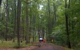 ošetřujeme stromy v Kunratickém lese