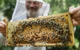 včelí plod