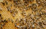 detail včelí plástve