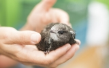 Ptáci se k nám dostávají nejčastěji po nárazech do překážek