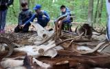 Stanoviště o myslivosti a lesních zvířatech