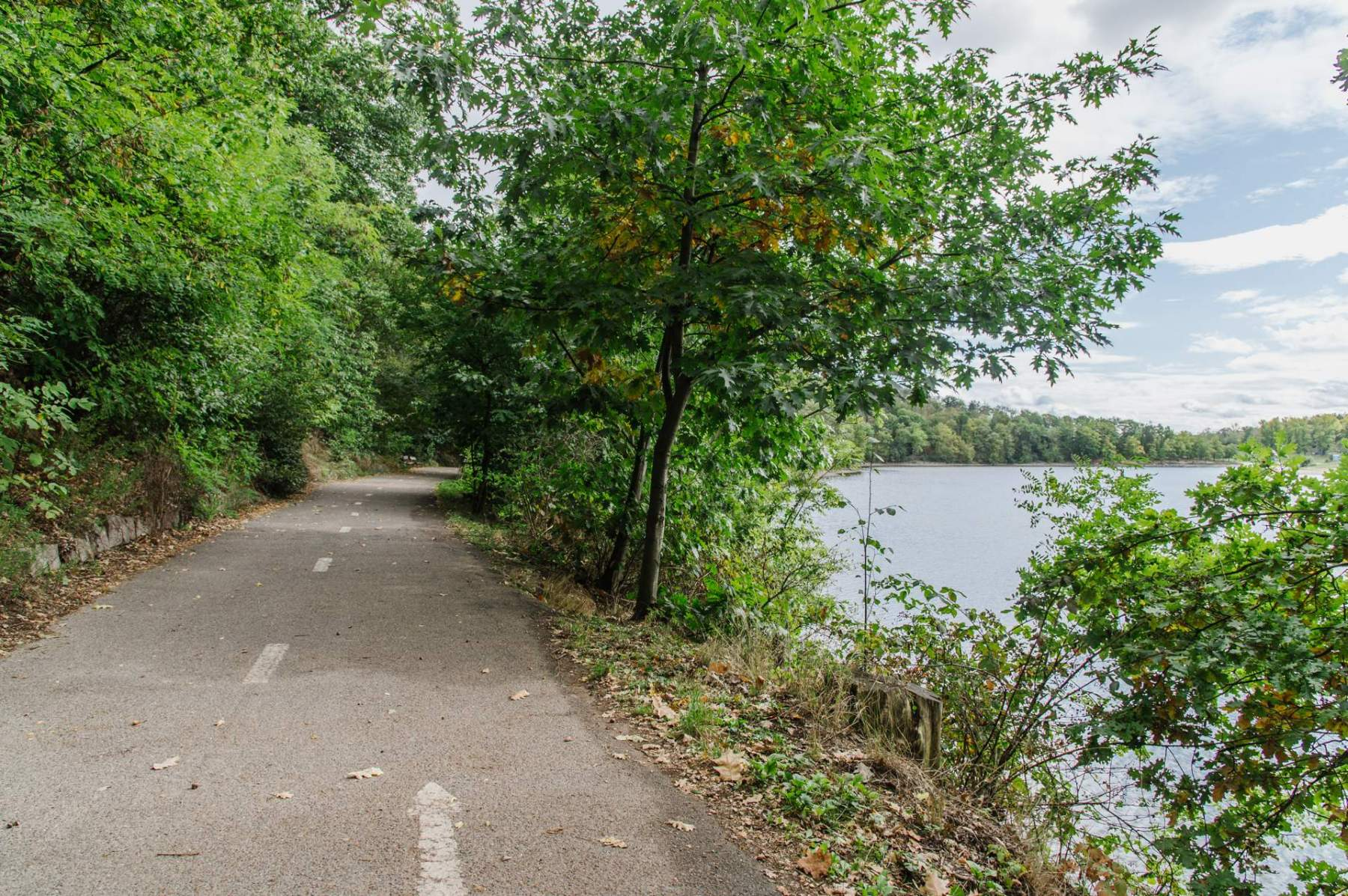 Cesta kolem přehrady, v jejímž okolí bude kácení probíhat