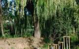 Výsadby kolem tůní Svépravického potoka