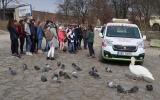 vypouštění uzdravené labutě