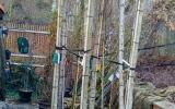 dřeviny připravené pro výsadbu