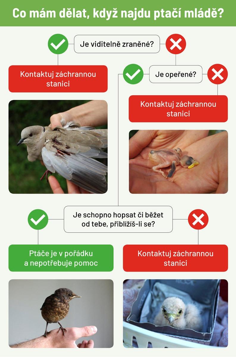 ptacata-schema_2021_nahled