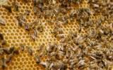 Kontrola včel
