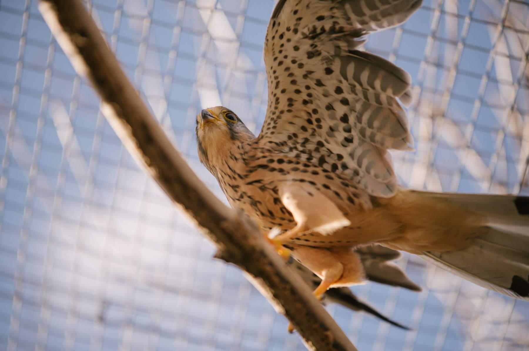 Sílí a trénují křídla.