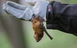 Vypouštění netopýrů