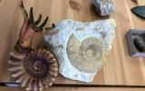 Zkamenělá země