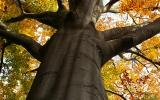 Památný strom v oboře