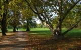 Královská obora Stromovka