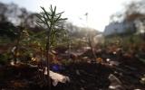 Sazeničky v lesní školce Čimice