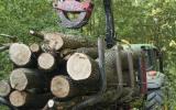 Doprava dřeva