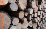 Dřevo z výchovných těžeb