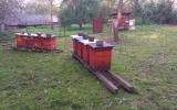 včelnice u Labutě - Kunratice