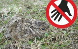 Neberte mláďata zajíců  z přírody zbytečně