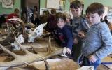 Povídání o lesní zvěři - býložravci