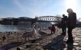 Zimní pozorování na Vltavě