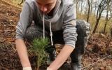 Sázení lesních dřevin